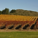 Santa Inez Valley Vineyard