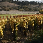 Solvang Vineyard in Autumn
